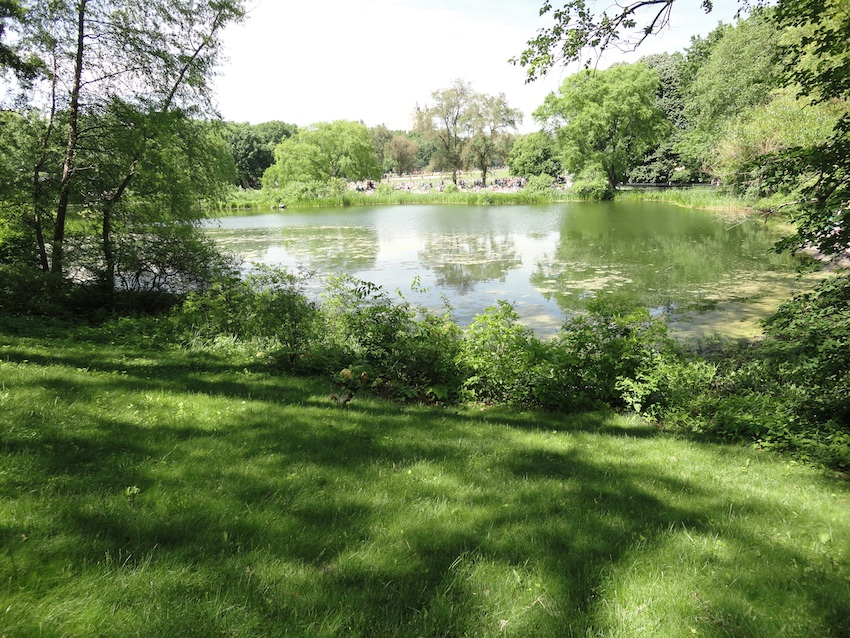 140601_CP-TurtlePond-4.jpg